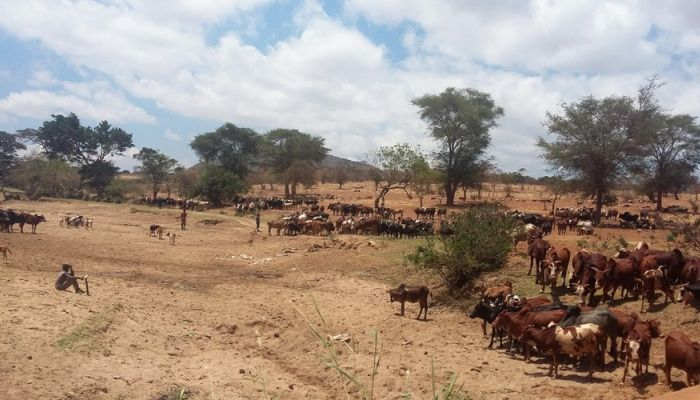 An eco-anthropological study of the customary-based management of pastoral resources among the Wahehe of Iringa  in Tanzania